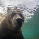 EXTREME close-up with a bear