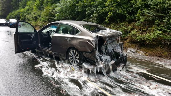 Highway Crash Leaves Motorists Bew-Eel-Dered!